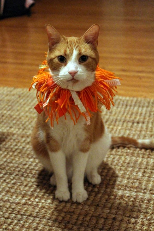 DIY lion cat costume & DIY lion cat costume | Little Treasures | Pinterest | Lions ...