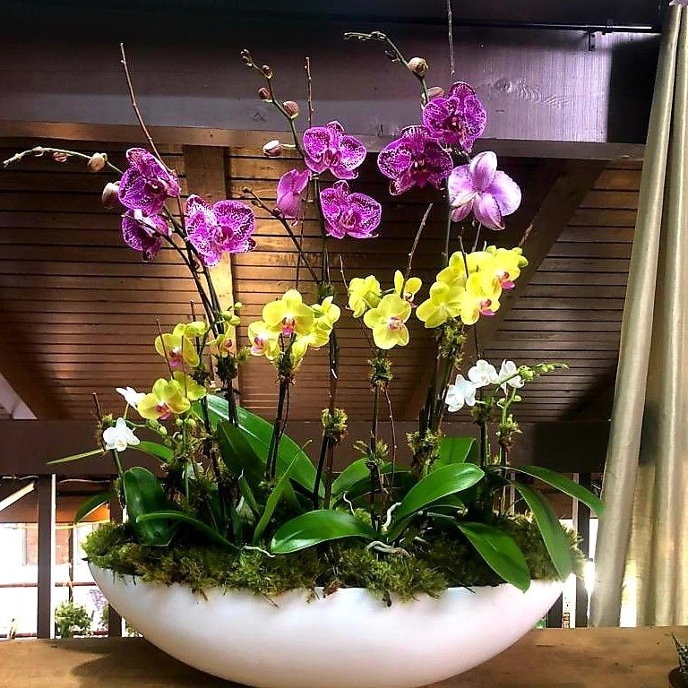 Beautiful Phalaenopsis Orchid Arrangements For Any Occasion Orchid Arrangements Orchids Phalaenopsis Orchid
