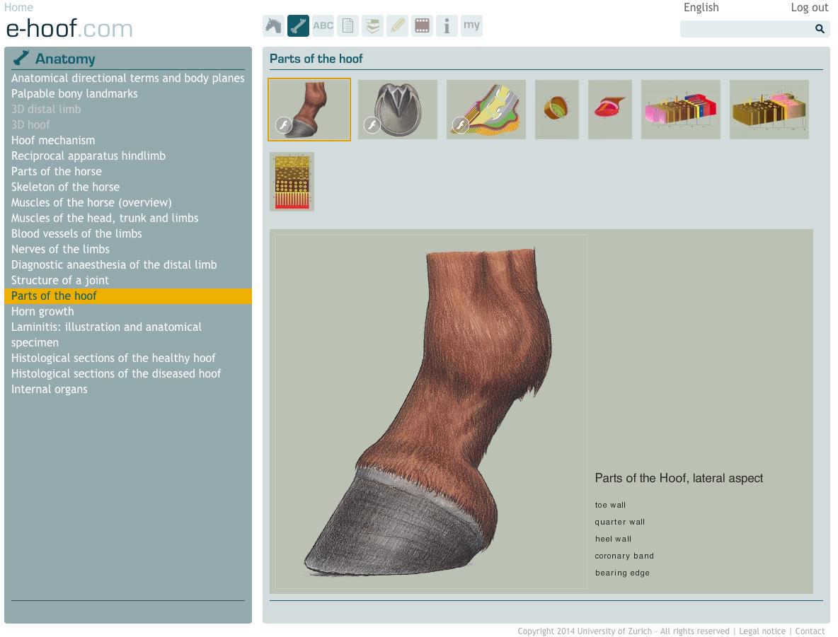 Horse hoof anatomy: Parts of the horse\'s hoof | e-hoof.com ...