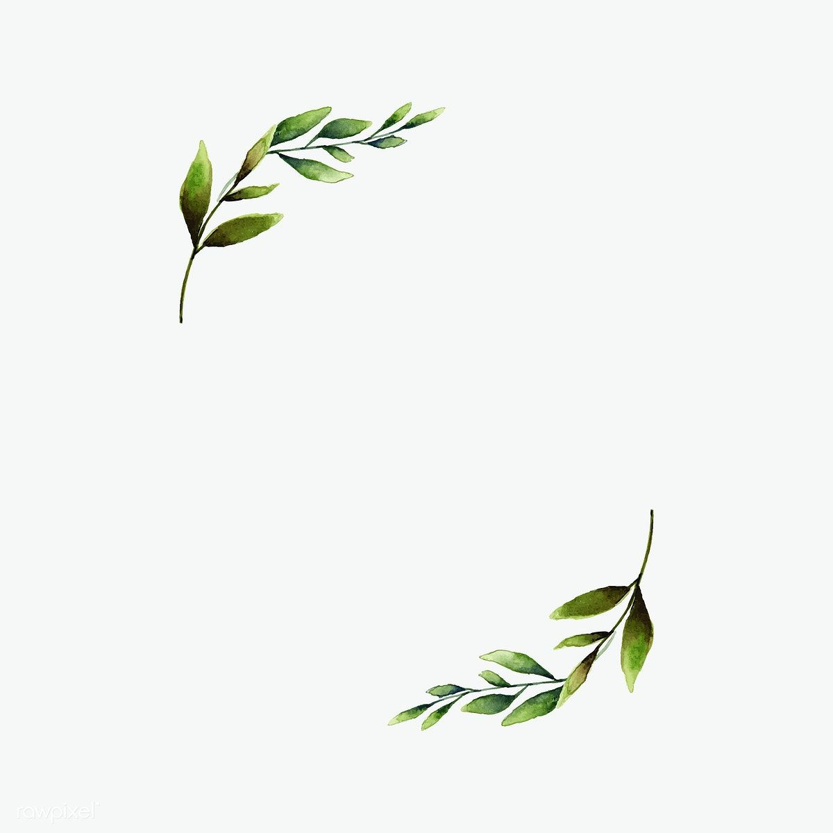 Hand Drawn Olive Branch Frame Watercolor Style Vector Free Image By Rawpixel Com Aum Suluboya Cicekler Dugun Karti Bitki