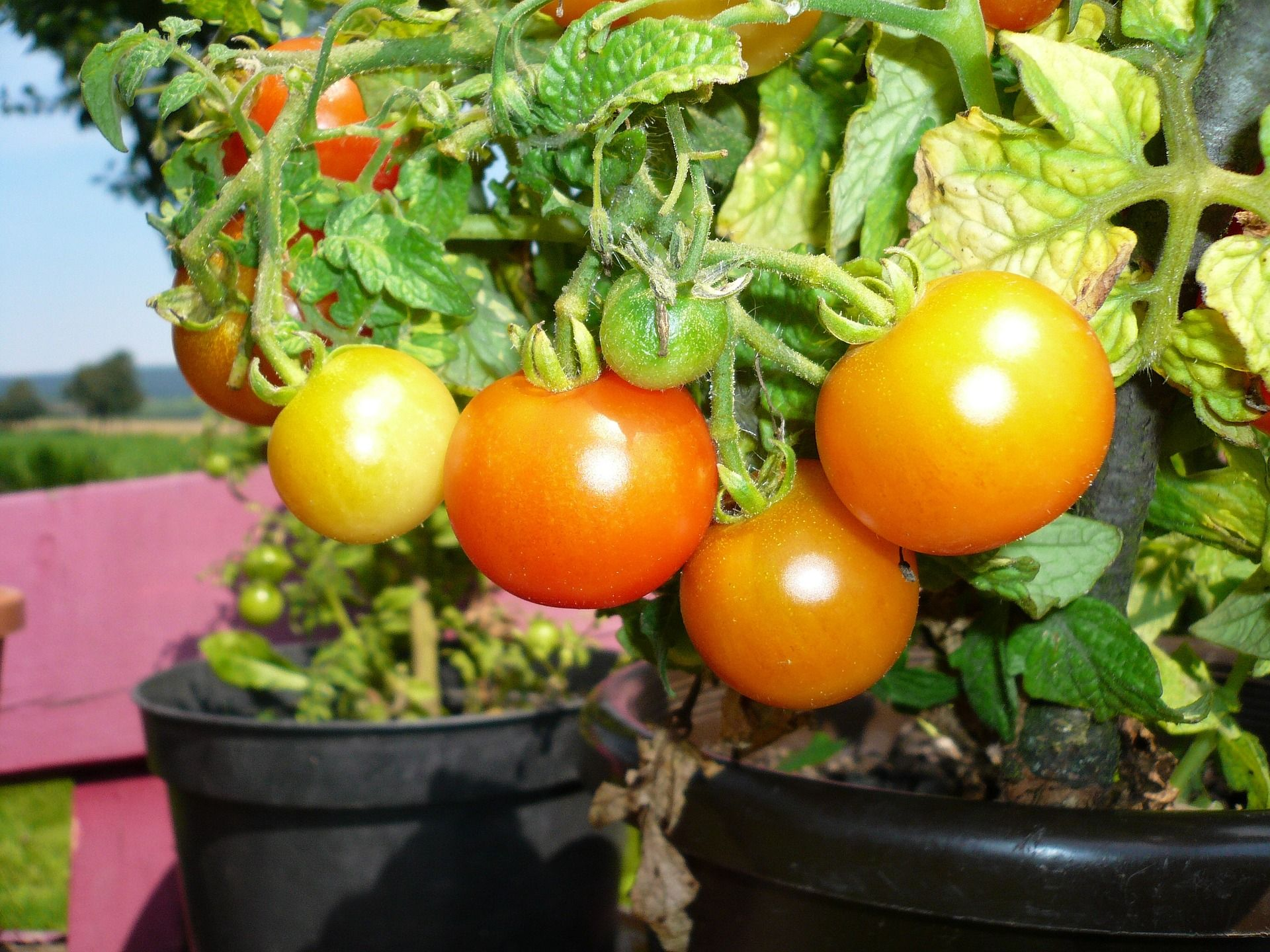 4 Ways To Maximize Growing Space With Container Vegetable 400 x 300