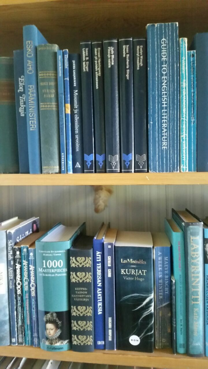 Kissa kirjahyllyn takana