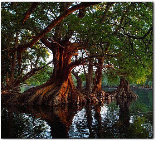 Lake Camecuaro, Mexico by Sergio Alfaro