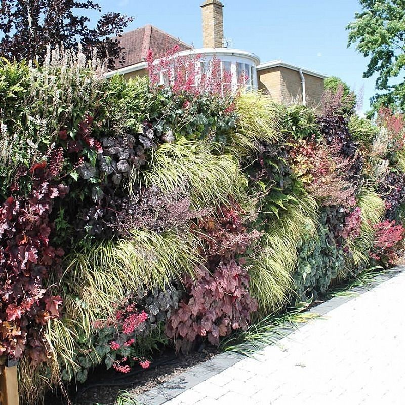 Blackheath Garden Design Living Green Wall The Silver Garden Contemporary Garden Living Green Wall Garden Landscape Design