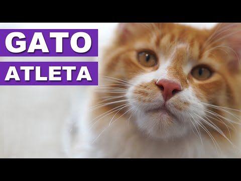 O GATO ATLETA - O que o seu pet faz quando você sai? - YouTube