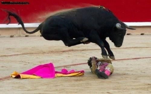 Bullenreiten Tierquälerei
