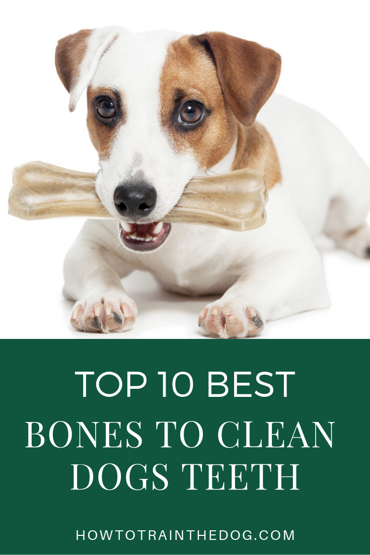 Top 10 Best Bones To Clean Dogs Teeth How To Train Your Dog Dog Teeth Cleaning Dog Teeth Good Bones