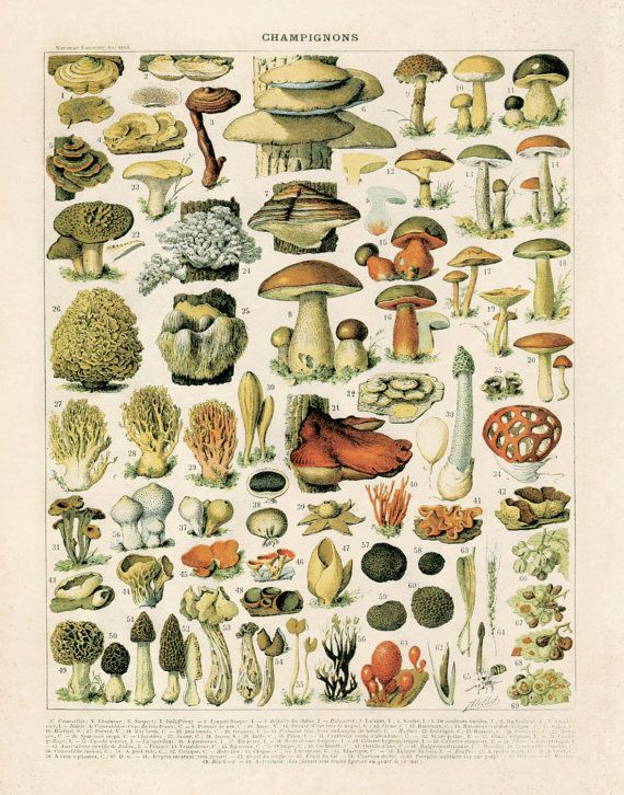Vintage Botanical Diagram Reproduction Variety By Curiousprints