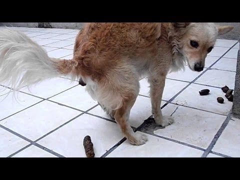 Como Enseñar A Tu Perro A Hacer Sus Necesidades Método Infalible Youtube Pulgas Perros Baño Para Perros Y Adiestramiento Perros