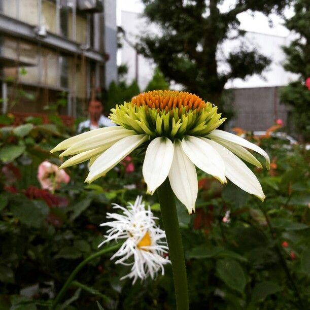 休みなく感じていきたい花びらの先はギザギザ。