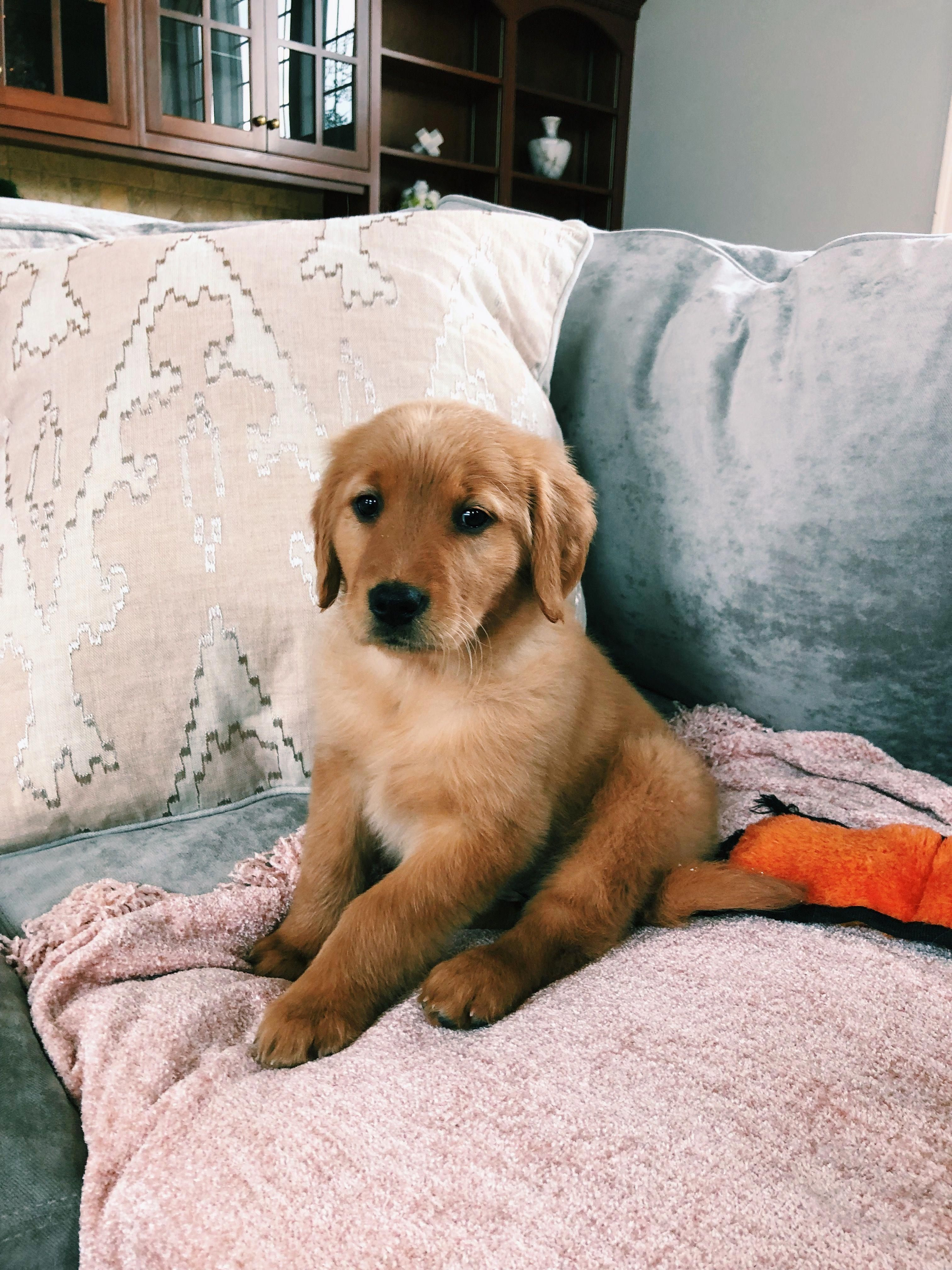 Find Out Even More Details On Golden Retriever Pup Visit Our