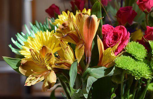 Alstroemeria Peruvian Lily Flower Meanings Alstroemeria Flowers