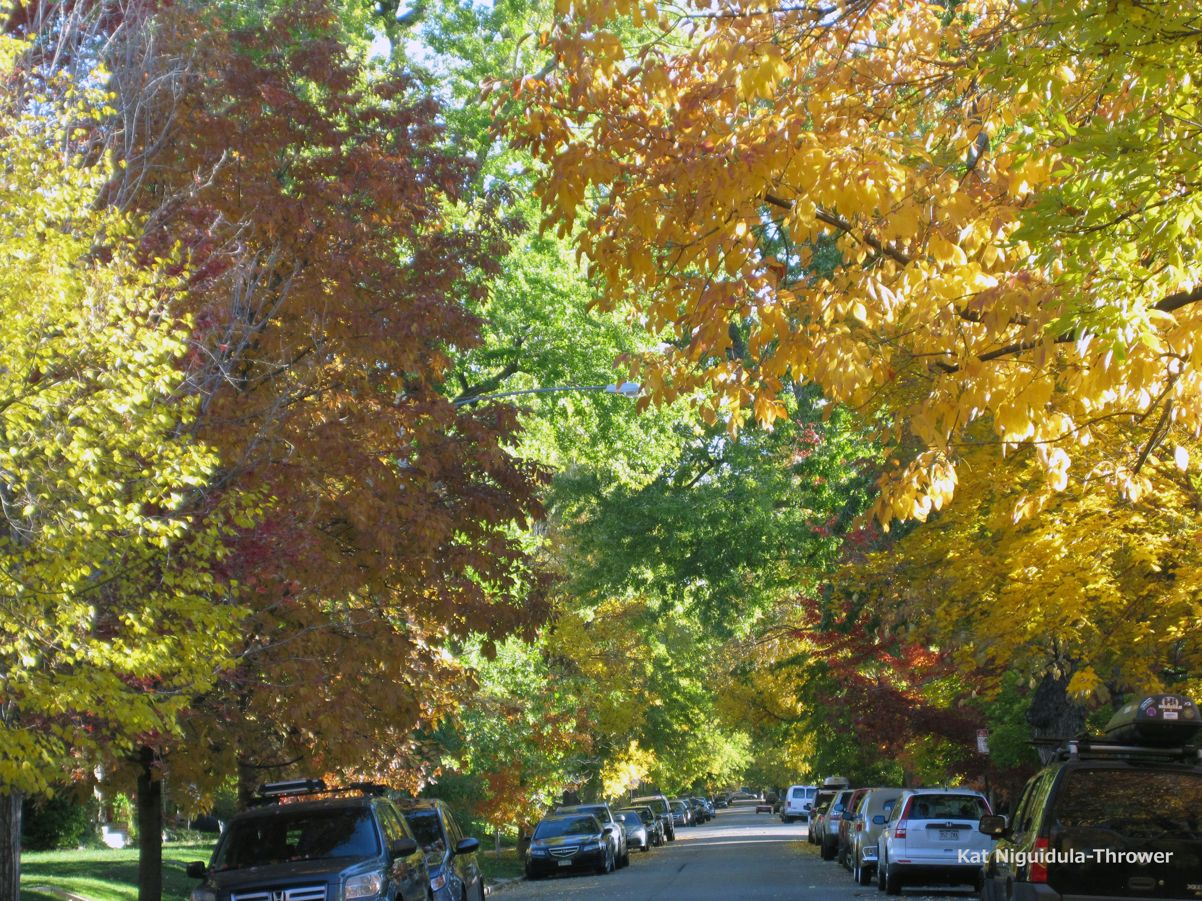 Diminishing daylight hours and dropping temperatures influence trees ...