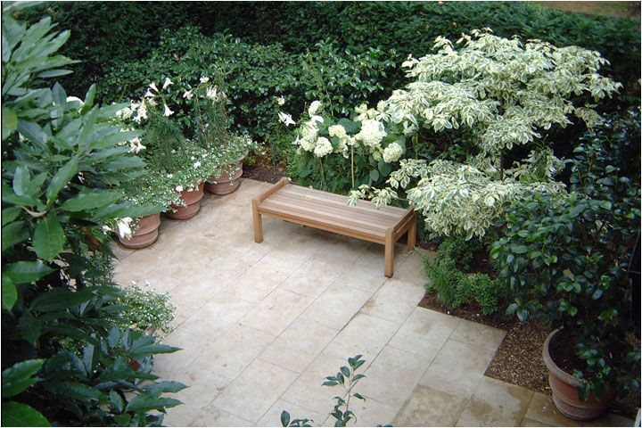 arabella lennox  repinned by toby designs all in white and again cornus controversa