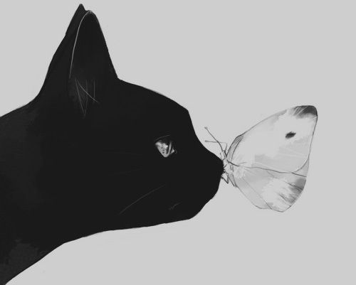 The Cat and the Butterfly