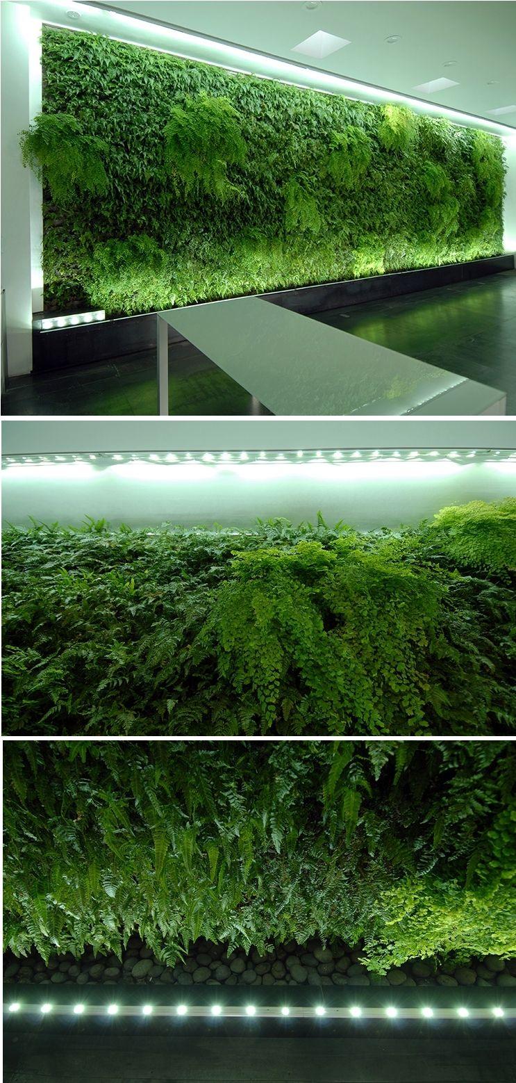 Verde verticale in un azienda nel entrata, visione completa, parte superiore e parte inferiore. Vertical green in a company in the entrance, complete view, top and bottom.