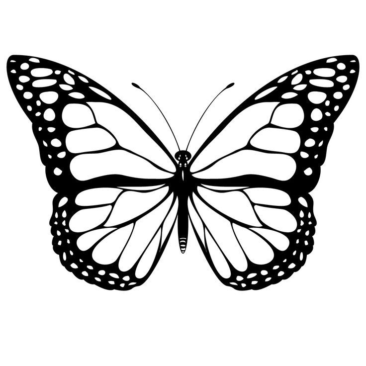 736 736 for Cool drawings of butterflies