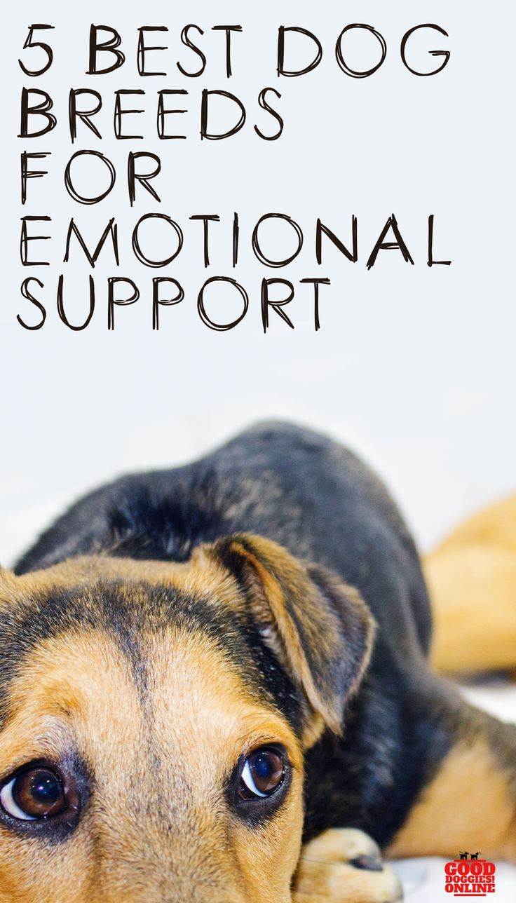 5 Best Dogs for Emotional Support Best dogs, Best dog