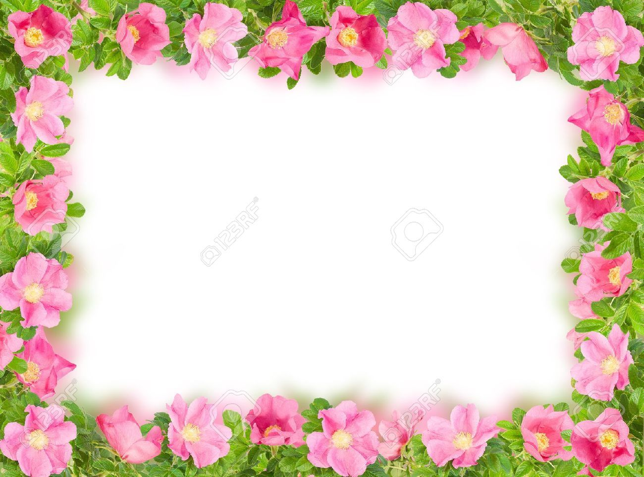 hot pink flower border