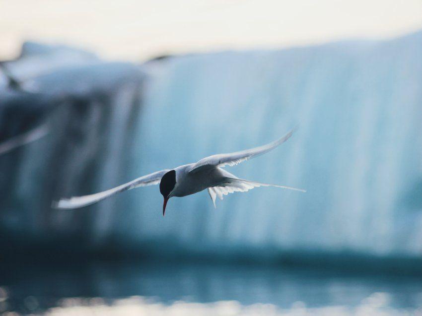 """""""Vom Gletschersees Jökulsárlón waren wir zunächst eher enttäuscht. Dann haben..."""