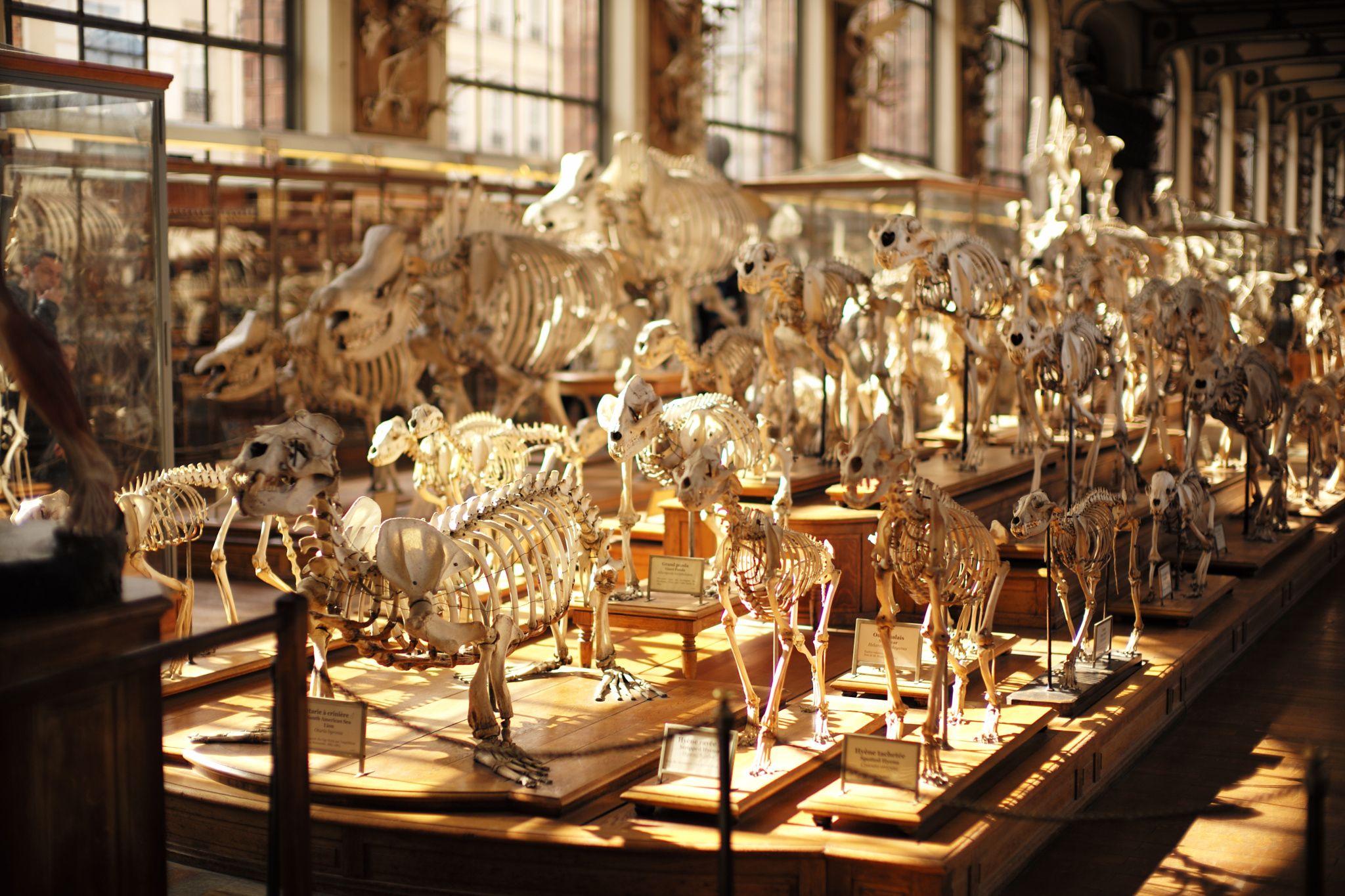 Skeletons, Muséum d\'Histoire naturelle, Paris - by Laurel Duermael ...