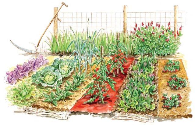Gemusegarten Planen Anlegen Pflanzen Arten Bereiche Kombinieren