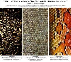 Bildergebnis für natur strukturen