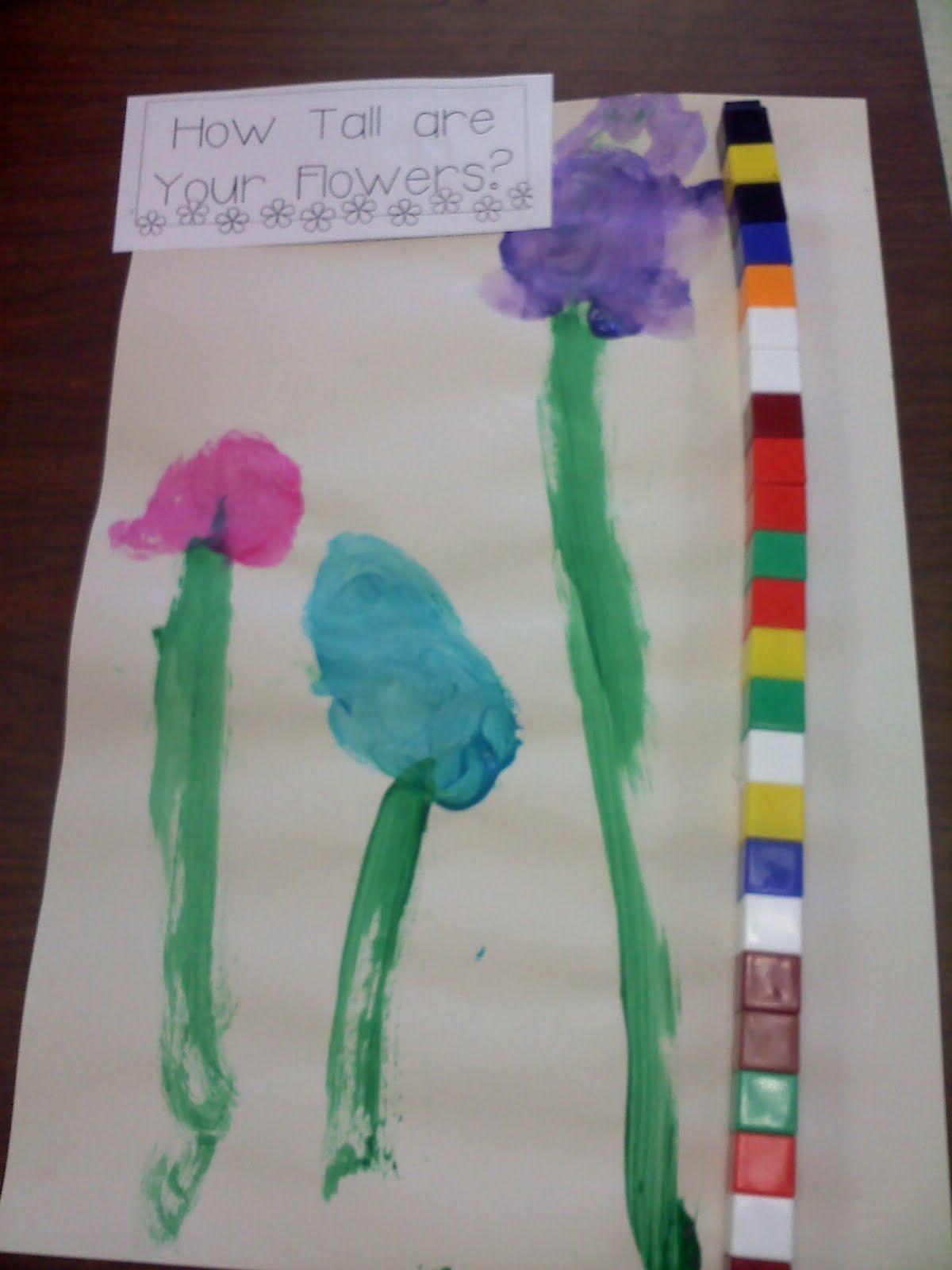 Mrs Wood S Kindergarten Class Flower Measurement