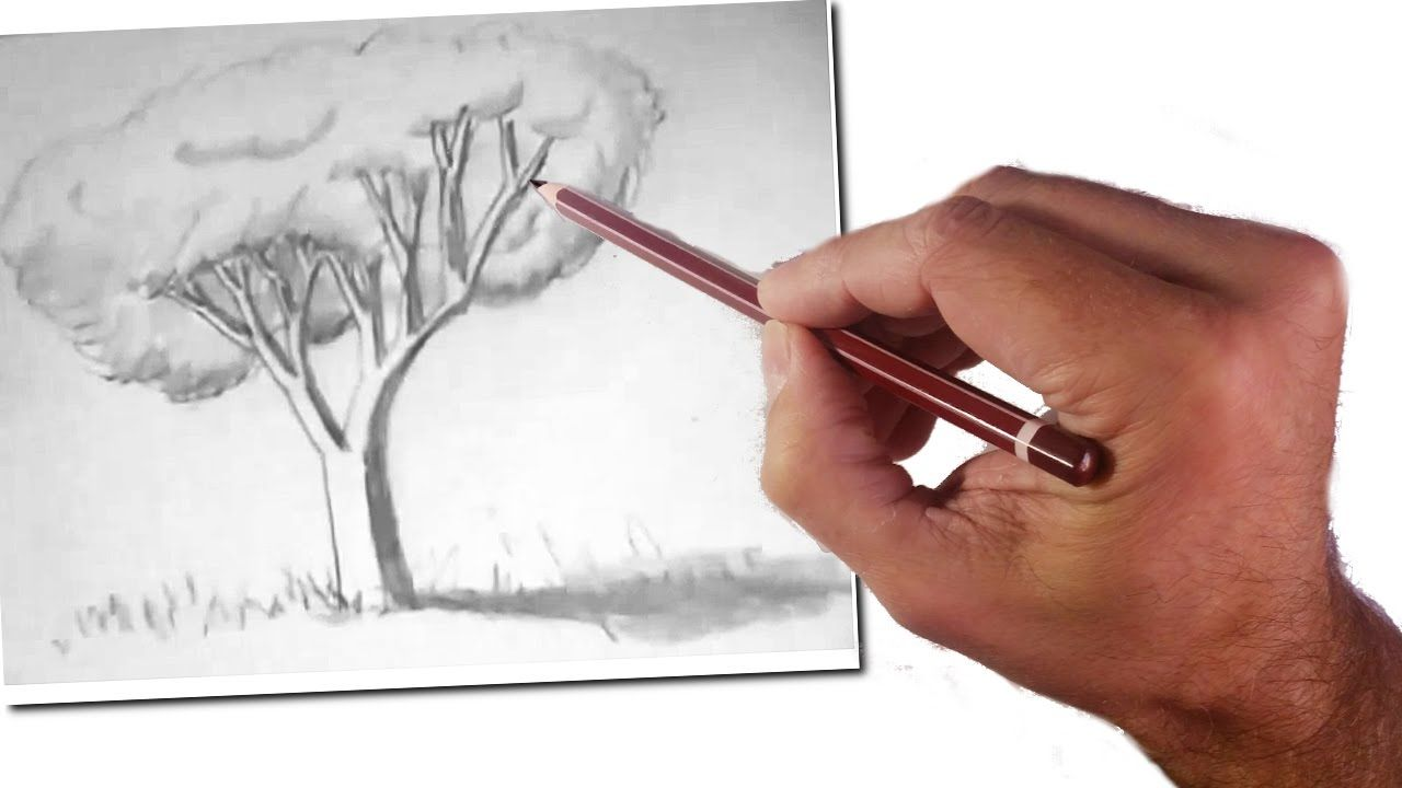 Como Ensenar A Dibujar A Ninos Un Arbol Realista Tecnicas De Dibujo Facil Arboles Dibujos A Lapiz Ensenar A Dibujar Arbol A Lapiz