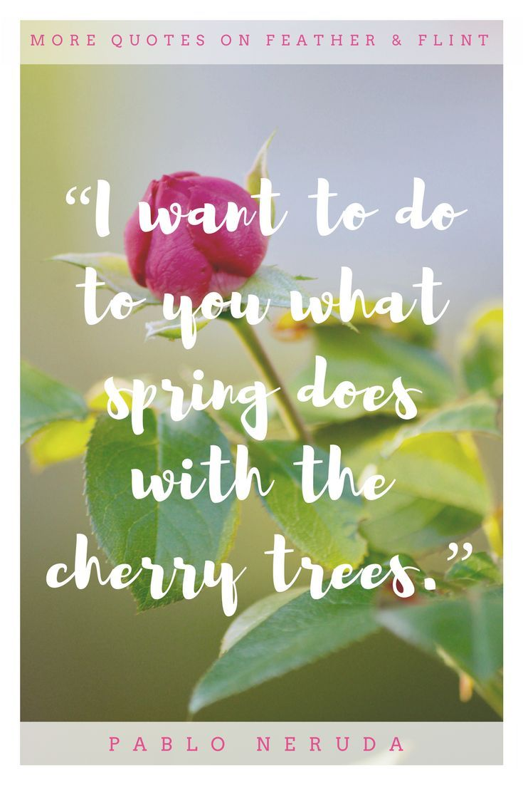 Spring Quotes Extraordinary In Celebration Of Spring Perfectly Curated Songs Quotes & Photos .