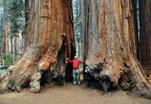 Yosemiti Nationapark USA Kalifornien
