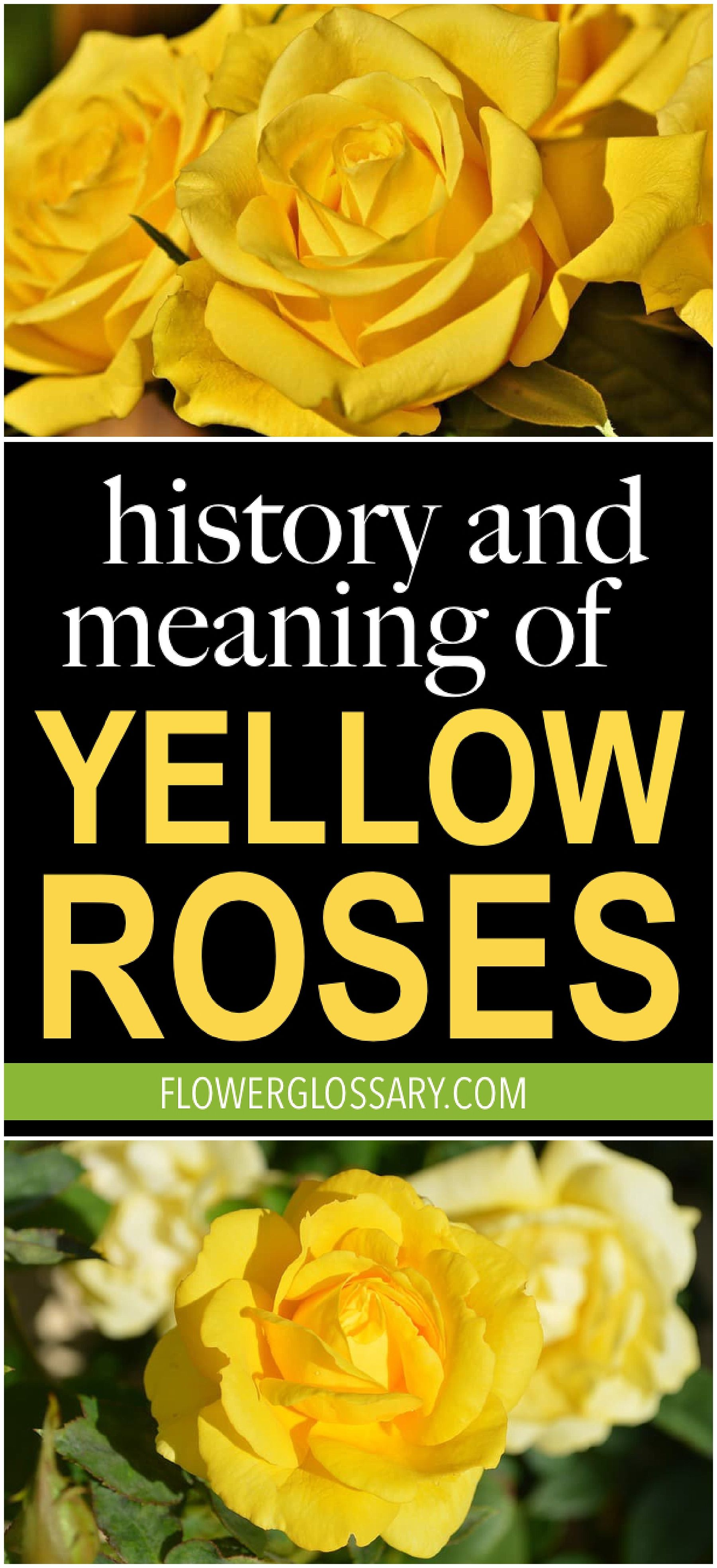 History And Meaning Of Yellow Roses Proflowers Blog Yellow Rose Bouquet Yellow Roses Rose