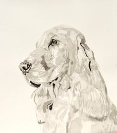 English Print Cocker Spaniel Cachorro Perro Arte Foto