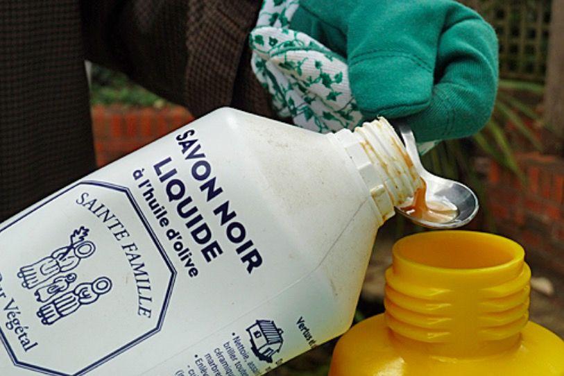 Fabriquez Votre Insecticide De Contact Naturel Astuces De Grand Mere Insecticide Naturel Savon Noir Anti Puceron Naturel