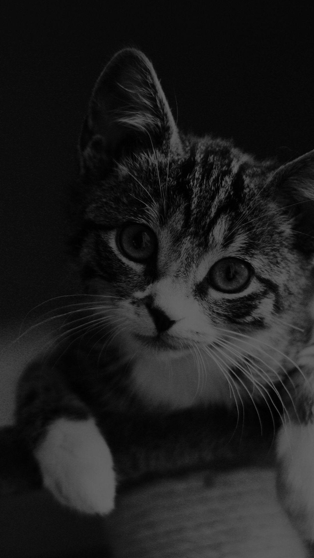Cute Cat Look Dark Bw Animal Love Nature Iphone 6 Wallpaper Cat Phone Wallpaper Iphone 6 Wallpaper Black And White Nature Iphone Wallpaper