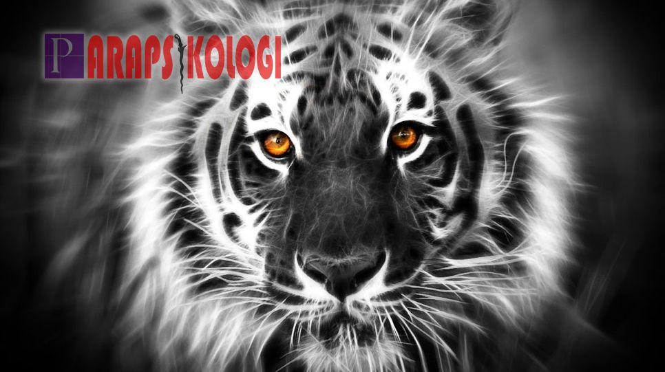 Tertarik Memiliki Khodam Macan Putih Ini Mari Simak Cara Memanggil Khodam Macan Putih Berikut Sebelumnya Anda Harus Tahu Dulu Mantra K Putih Gambar Pengikut