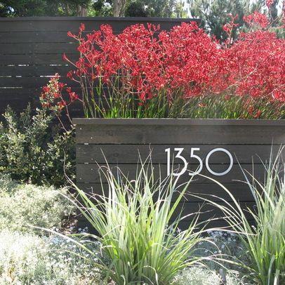 Modern Family Retreat   Modern   Landscape   San Diego   Debora Carl  Landscape Design