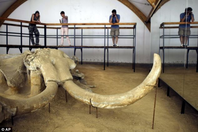 Find: Archaeology students study the remains of a mammoth discovered at an open pit coal mine east of Belgrade in Serbia where archaeologists say they have discovered a at least five of the giant animals