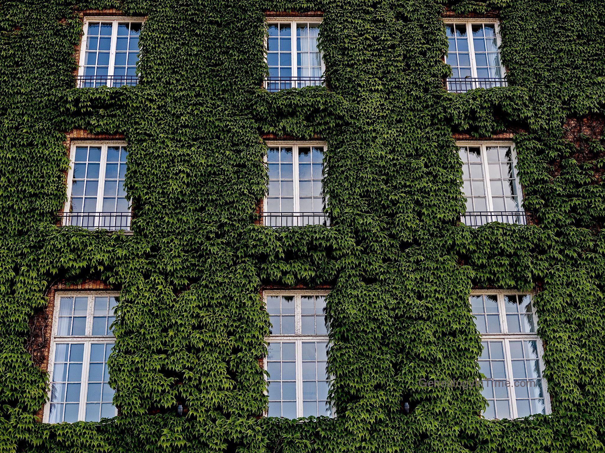 26 ivy covered brick wall jpg 2048 1536 brick wall on brick wall id=60910