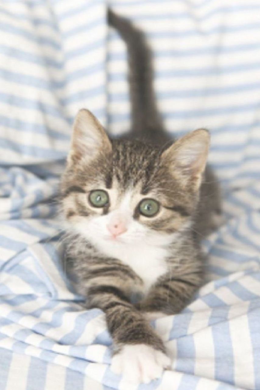 Tiny Adorable Kitten Goes Exploring On His Person S Bed Seconds Later This Happens Video Kittens Cutest Cat Facts Kittens Funny
