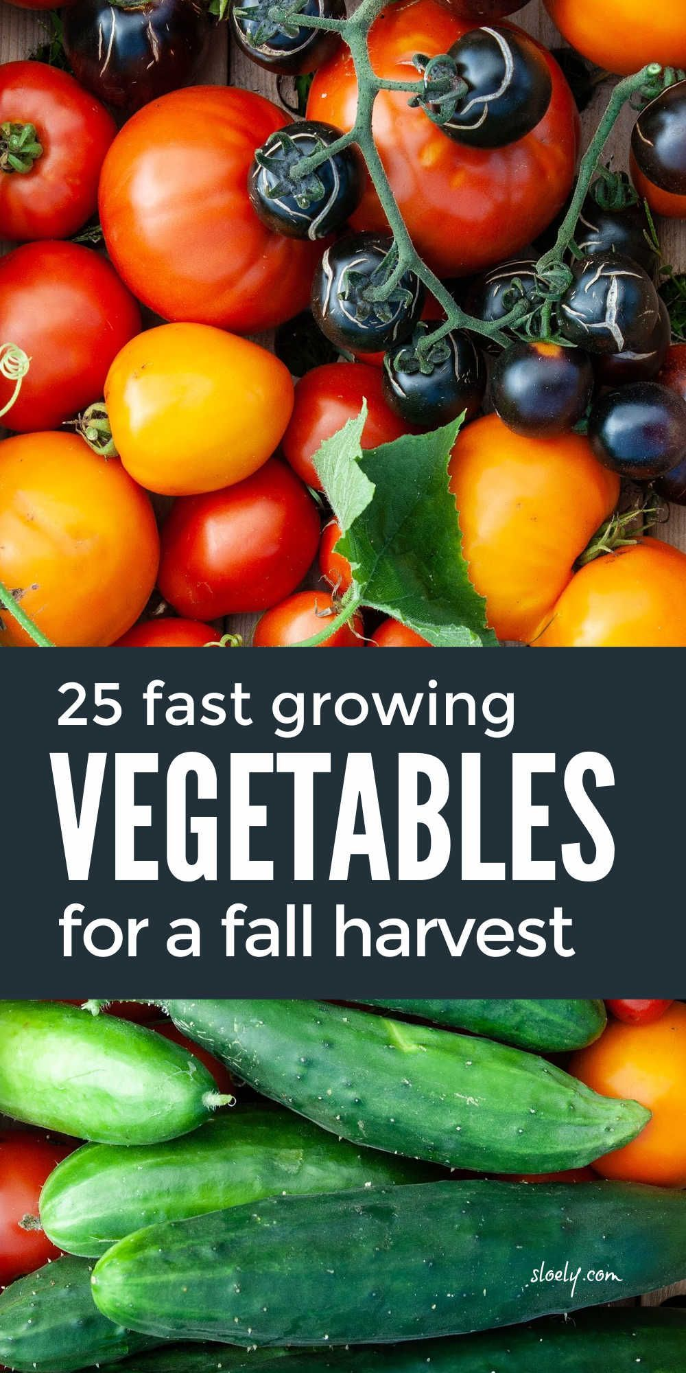 Fast growing vegetables you can plant now as seeds in pots for a fall harvest. These easy to grow vegetables are perfect for beginners to grow in containers if you don't have raised beds. #growingvegetables #fastgrowingvegetables #growingvegetablesinpots #growingvegetablesincontainers #fallharvest #fallvegetables
