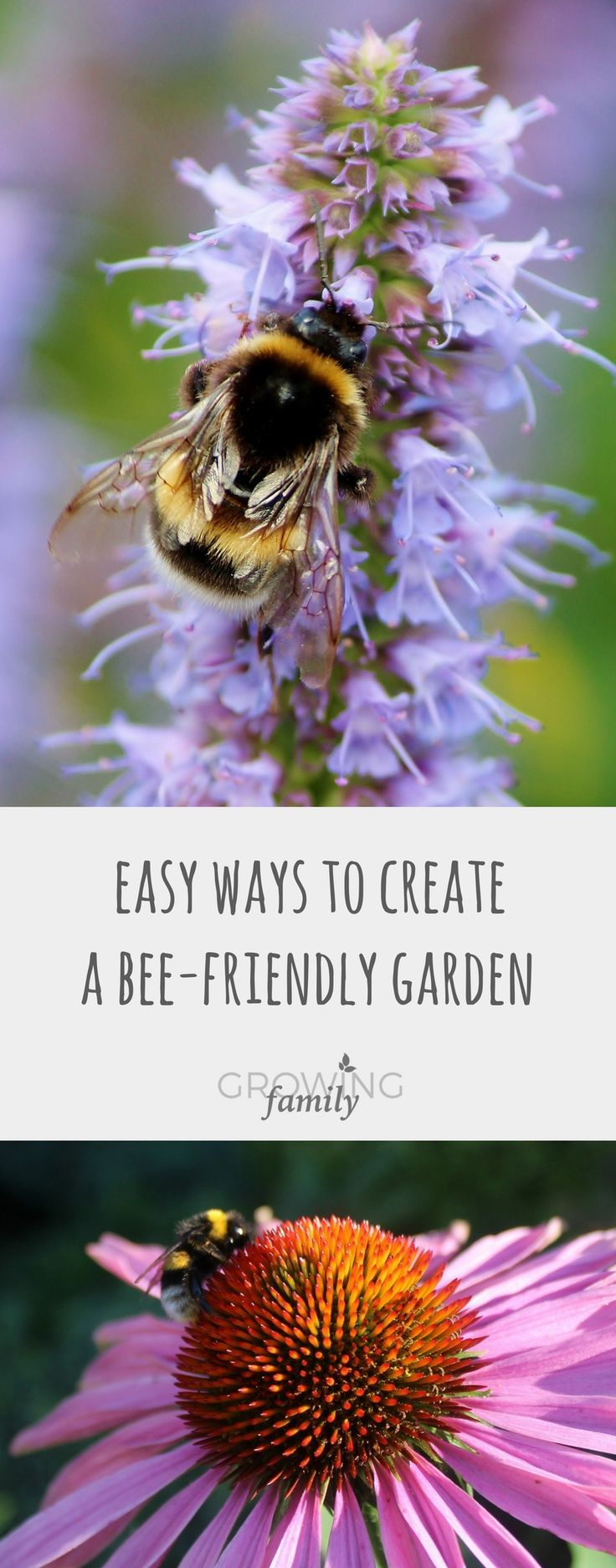 The best flowers for bees, and easy ways to make your