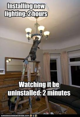 #cat #meme #joke #lightbulb #fixture