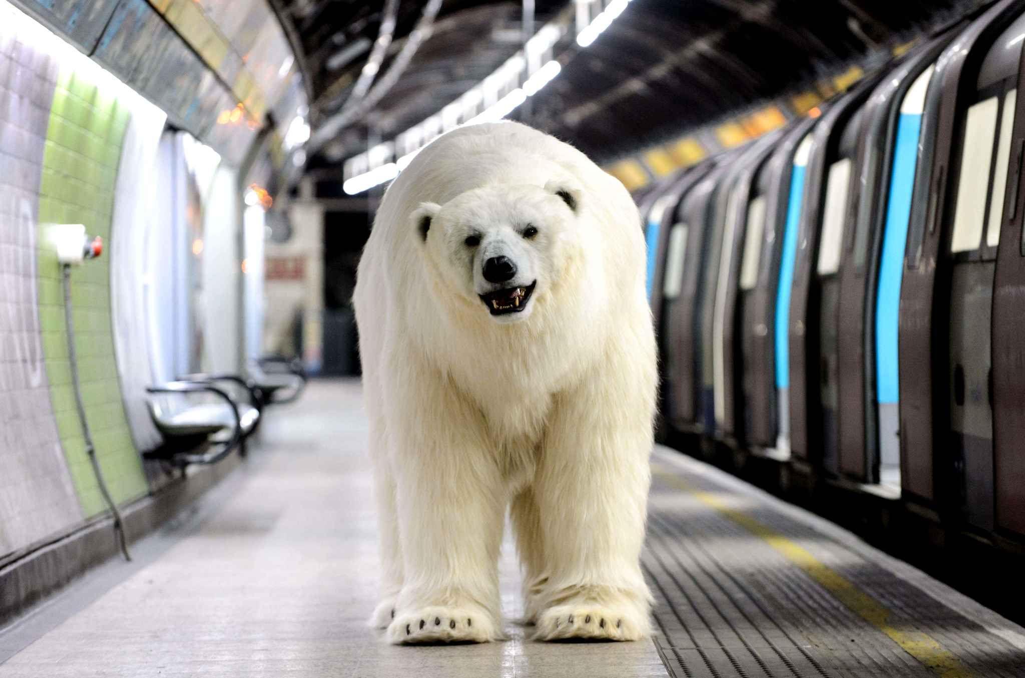 Pas de panique, il ne s'agit pas d'un vrai ours polaire envahissant le métro londonien, mais d'un coup de pub pour la série Fortitude sur Sky Atlantic.