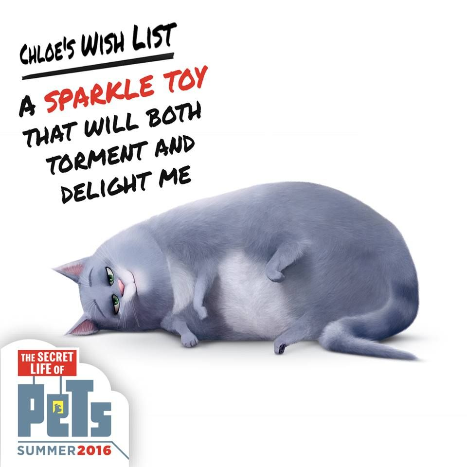 Chloe had a lot of kitty toys on her wish list these past
