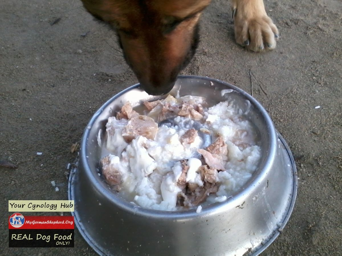Real Homemade Dogfood Shared Always Only Forhealth For Life