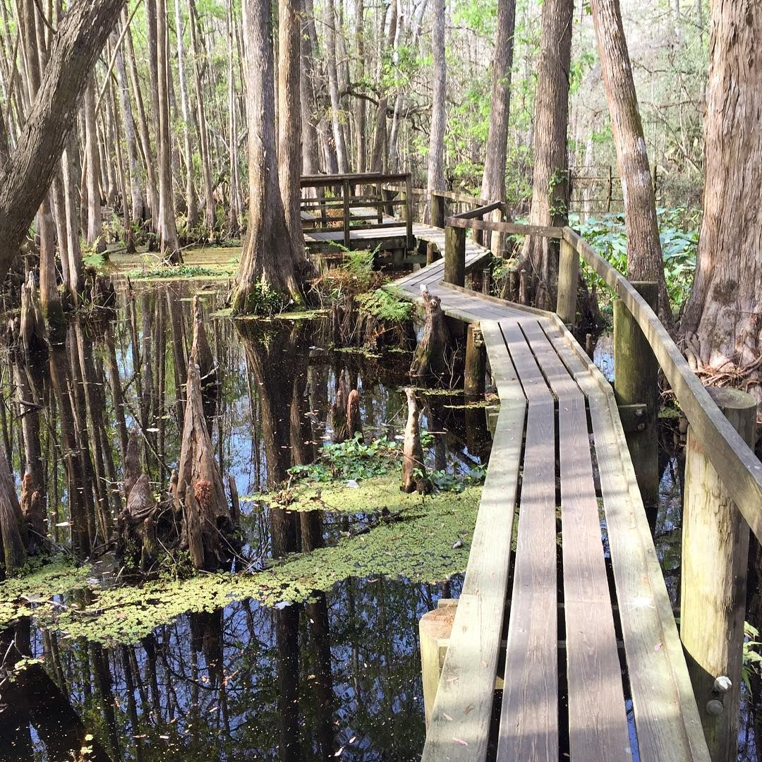 Highland Hammock State Park In Florida - Crazy Family Adventure