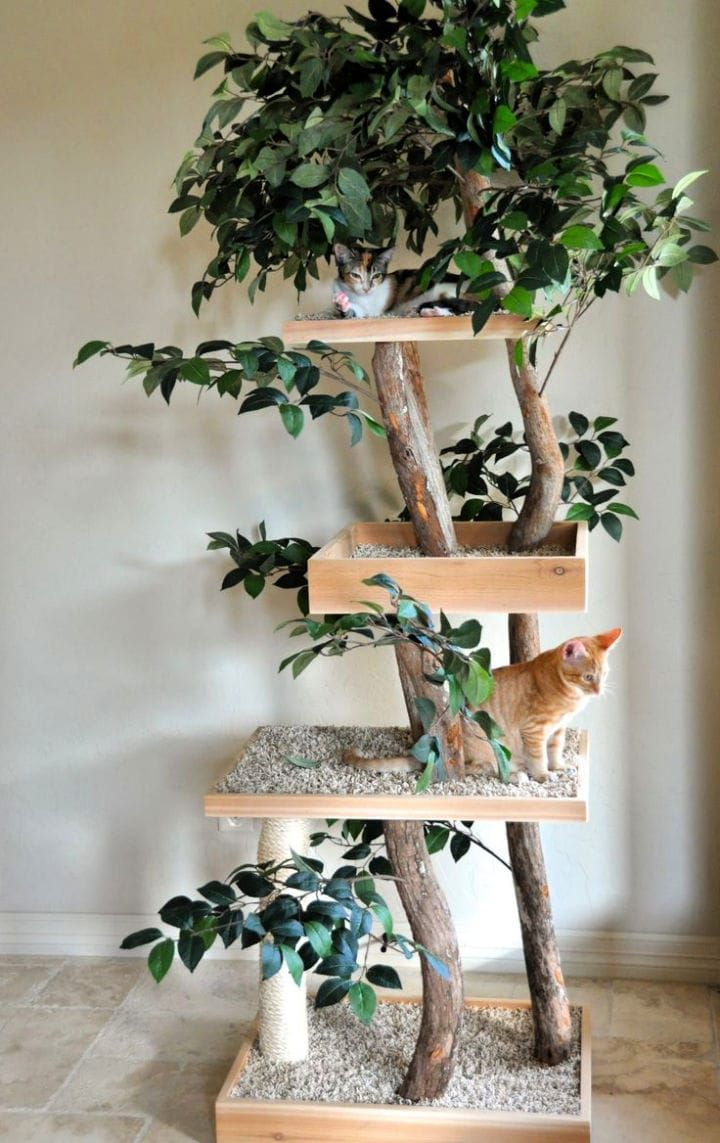 15 Best Outdoor Cat Tree Ideas and Plans