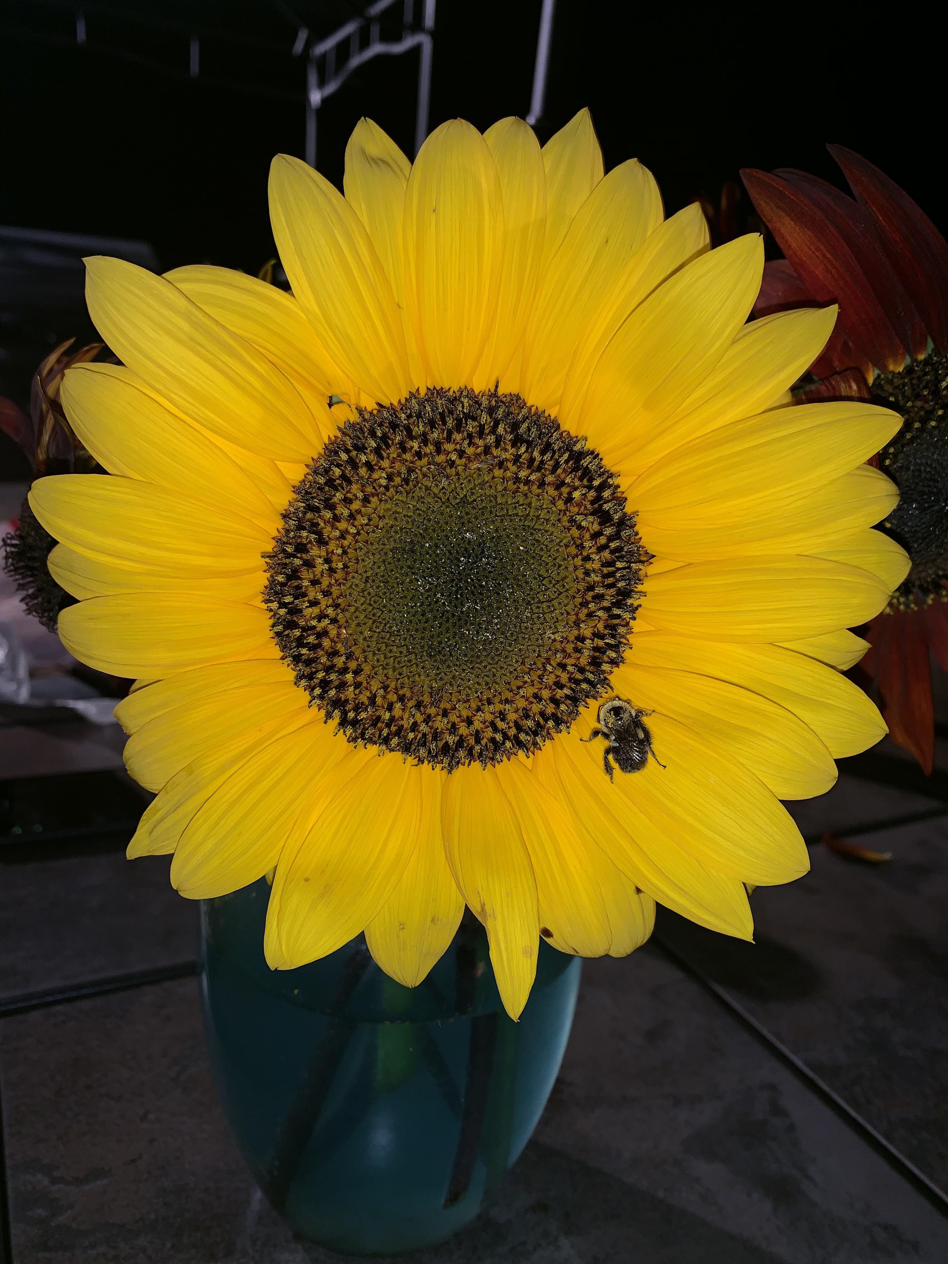 Lemon queen ft. KOd bumble gardening garden DIY home