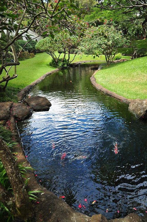 Trees river koi beautiful caution wild birds and for Artificial fish pond